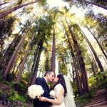 branches & butterflies  |  NESTLDOWN WEDDING