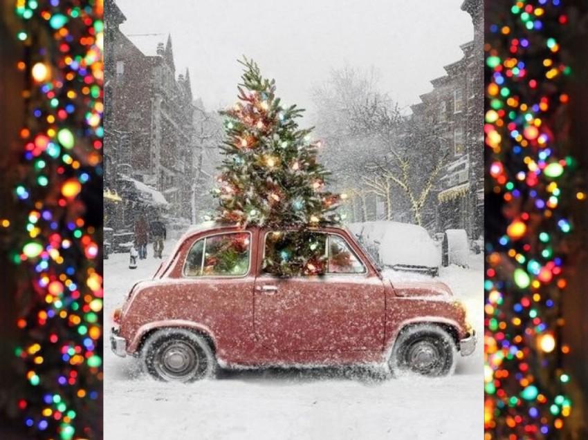 orgins of christmas trees.001