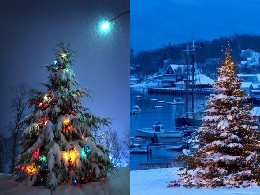 orgins of christmas trees.009